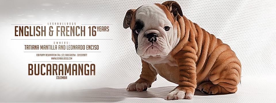Los Bulldogs Los Bulldogs